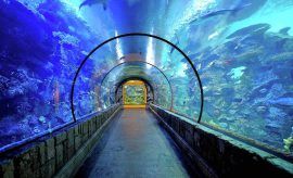 2,000 animals in 1.6 million gallons of water at Shark Reef Aquarium