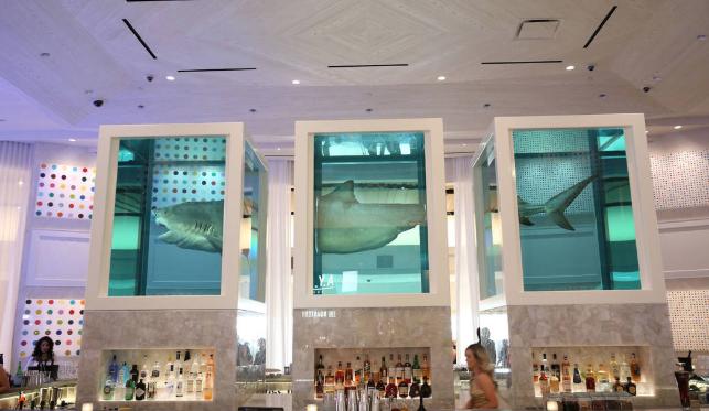 unknown-bar-shark